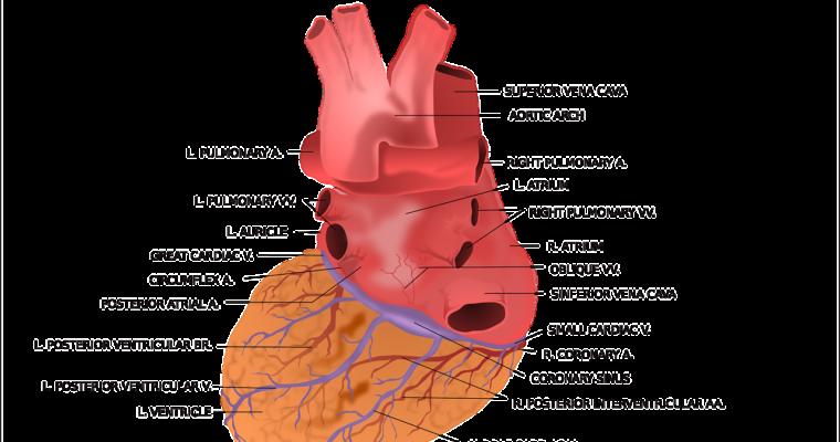 Omron Blood Pressure Monitor Comparison Chart Comparison Mister